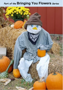 Scarecrow surrounded by pumpkins and flowers, happy about his audit results